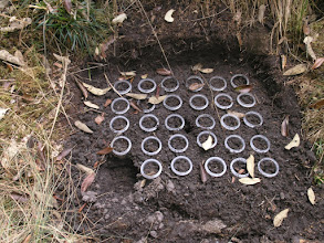 Photo: An experimental array we will use for germination experiments after we put a fence around the thing. A cow stepped on one of the tubes, pushing it about 4 inches into the ground.