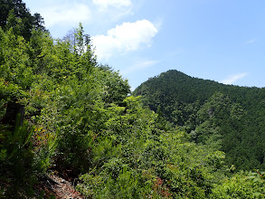 右に伐採地跡