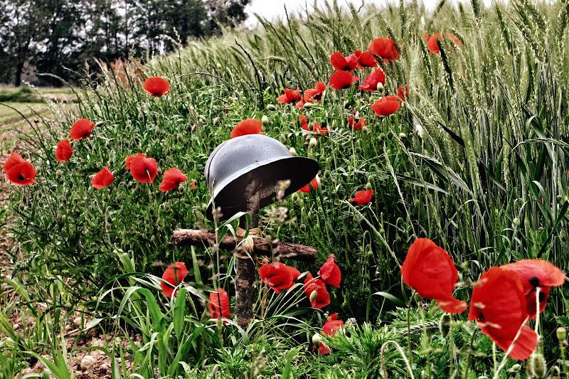 Dormi sepolto in un campo di grano...   di AlfredoNegroni