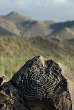 Photo: Petroglyph, Signal Hill, Saguaro  National Park, Arizona