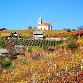 Saint Anne's  vineyards in autumn dress by Vladimir Krizan - Landscapes Prairies, Meadows & Fields