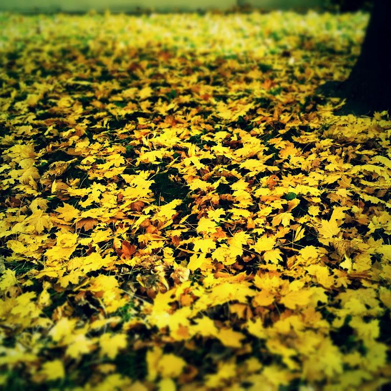 Bellezze d'autunno di zenithmar