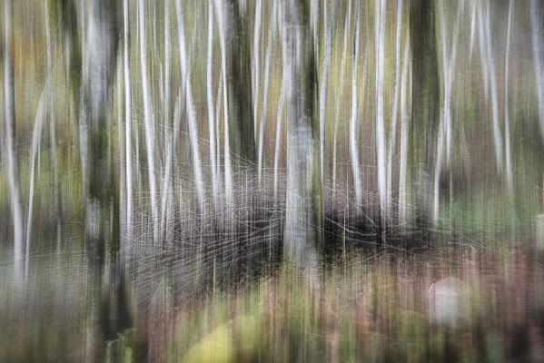 Il bosco incantato di Schivio