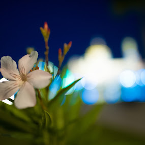 by Mohamad Sa'at Haji Mokim - Novices Only Flowers & Plants