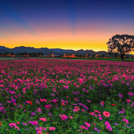 Huā hǎi 2/5000 Flower sea by 曾 程泓 - Flowers Flower Gardens