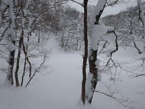 雪に覆われた音羽池