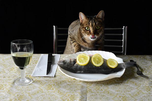 Attenti al gatto! di BASTET-Clara