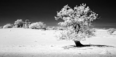 Photo: The Tree and The farm (Clive Haynes)