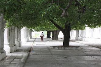 Photo: Year 2 Day 55 -   An Avenue of Shade at Kuthodaw Paya