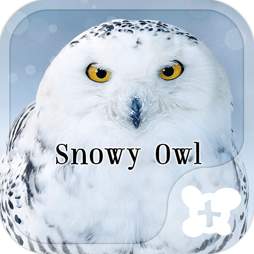 Snowy Owl wallpaper Icon