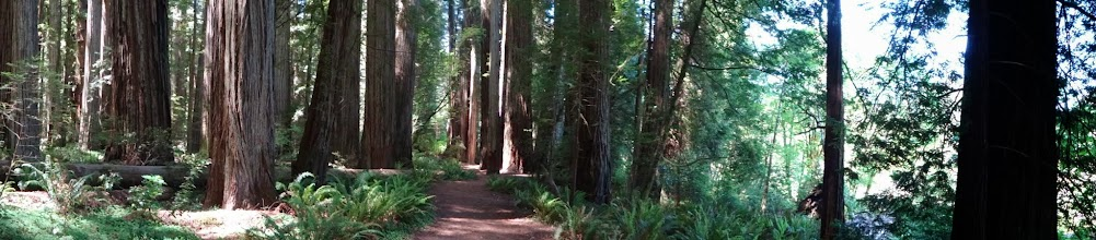 Photo: Shaded trails