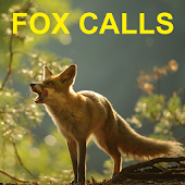 Predator Calls for Fox Hunting