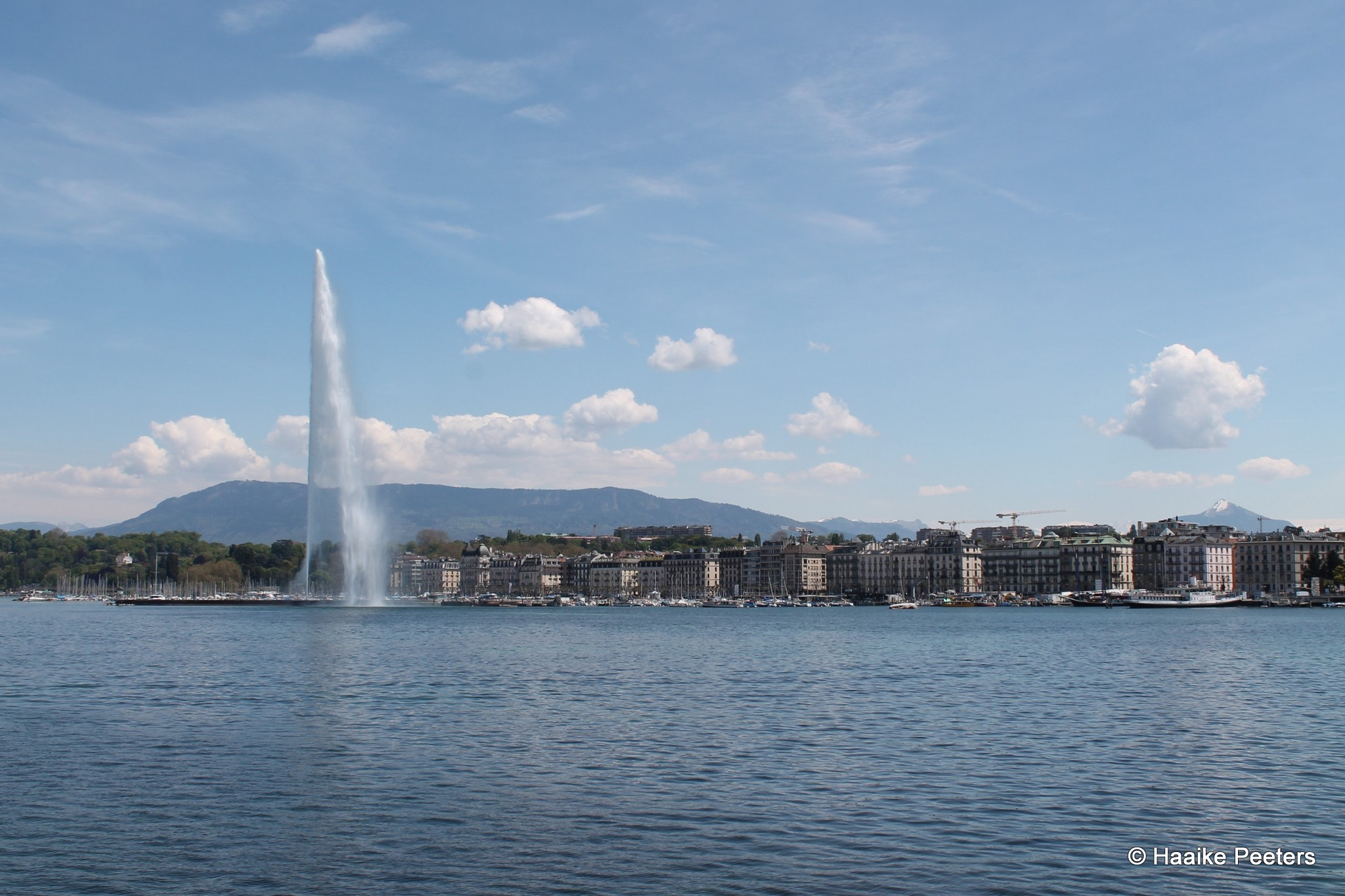 Lac Leman Genève (Le petit requin)