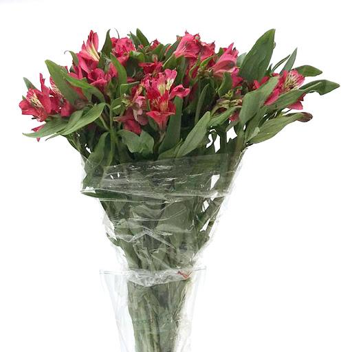 flores alstromerias Alstromerias