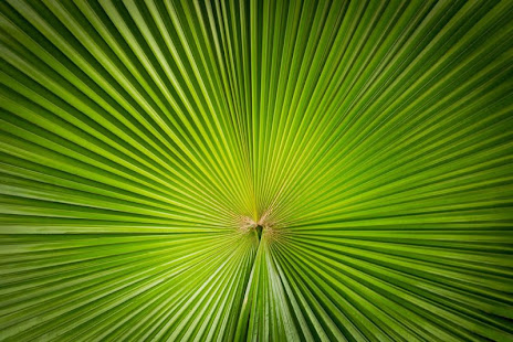 Grüne Linien Hintergrundbilder – Apps bei Google Play