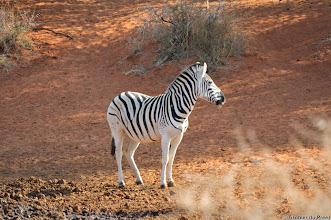 Photo: Black on white (or is it white on black?). Mokala National Park.