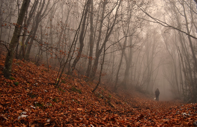 In the misty afternoon  di M4RIA