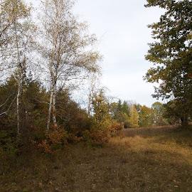 Есен by Georgi Kolev - Novices Only Landscapes ( небе., ден., есенен., време., дървета. )