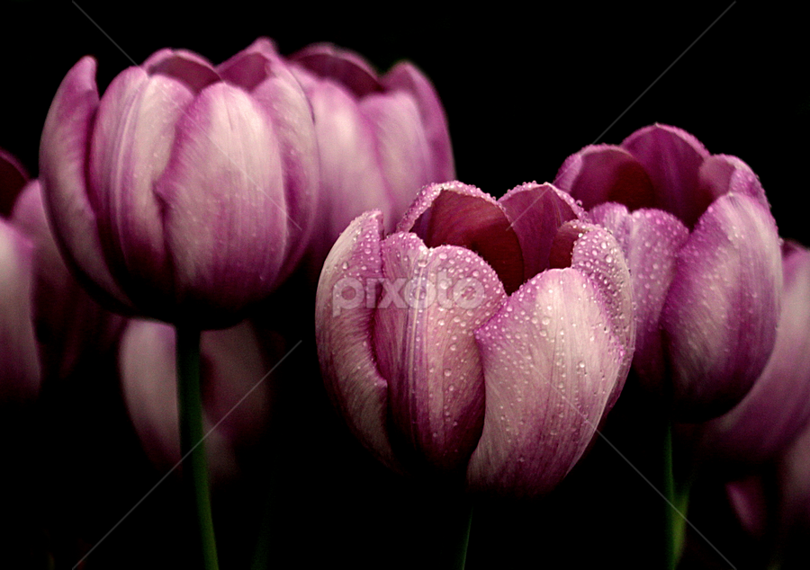 by Michael Boyle - Nature Up Close Flowers - 2011-2013