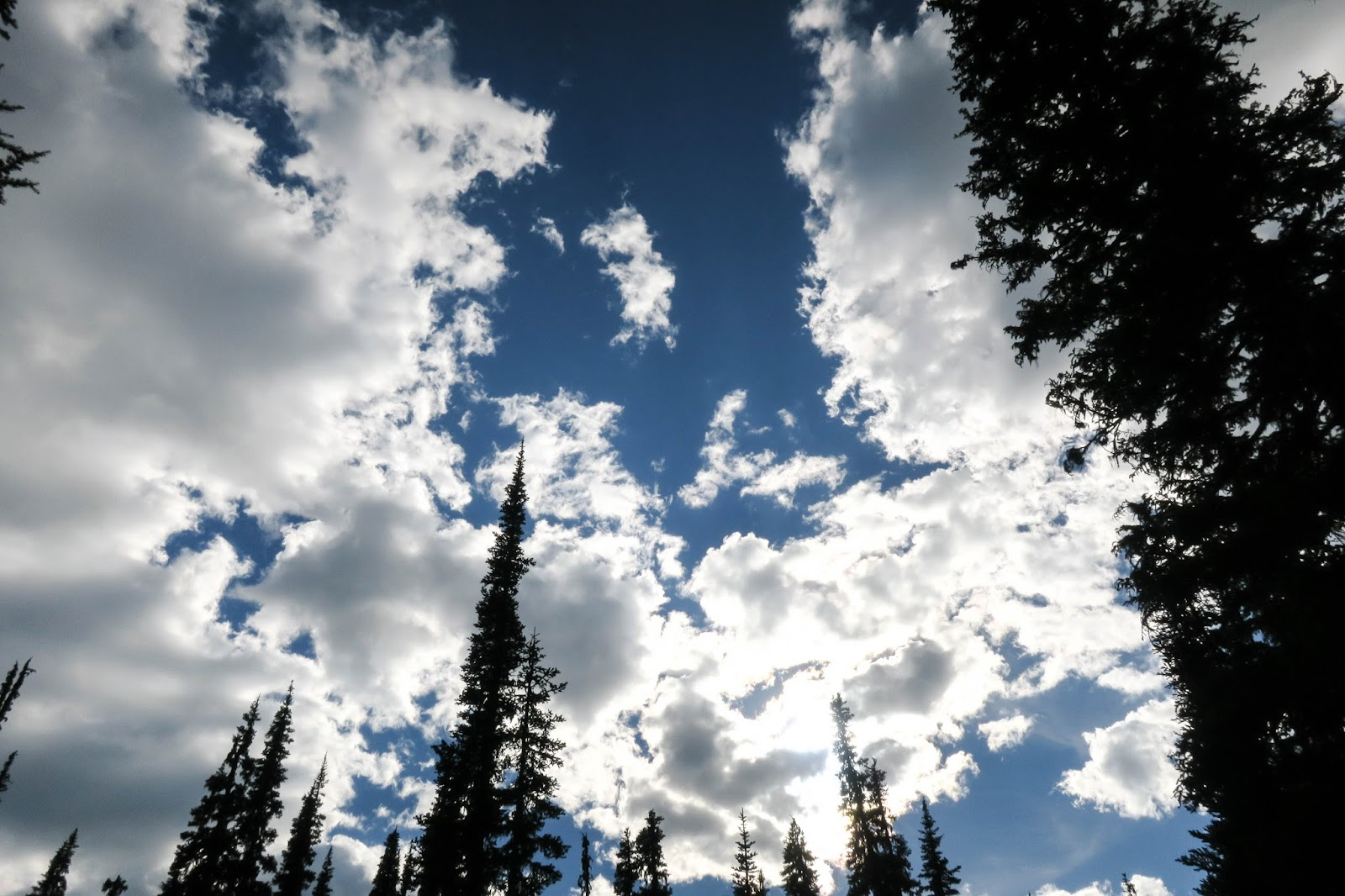 Clouds and trees along the Pacific Crest Trail