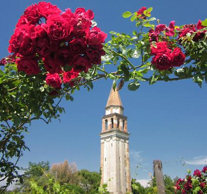 Se son rose fioriranno di atlantex