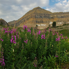 Summer in the Wasatch by Ramsey Samara - Landscapes Mountains & Hills ( utah, purple, timpanogos, basin, wasatch )