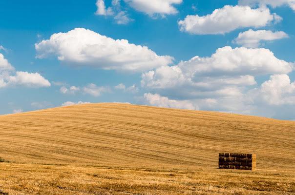 Campi di grano in Val D'Orcia di Atum-Pietro