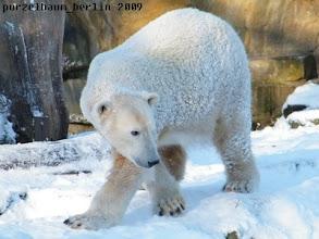 Photo: Knut bestaunt seine Schneelandschaft :-)