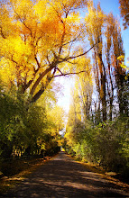Photo: Today on Speargrass Flats Road Here's a beautiful little road in my neighborhood here between Queenstown and Arrowtown. This is the road I go jogging down and right by my turn-around point. I absolutely love running down this tunnel of trees while listening to music! And to see the amazing colors that are popping out this week - omg!  I think +Vic Gundotracame down this road too with his family on a scavenger hunt, but that day was all foggy and moody— today it looks quite different! :)  #MyBeautifulEarth