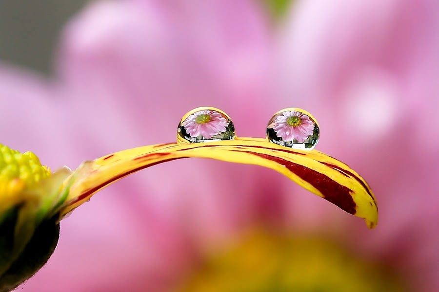 Water Drops by JL Tan - Abstract Water Drops & Splashes
