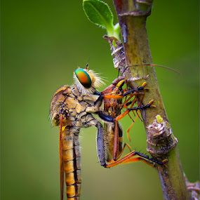 Lunch Time by Anton Wahyudi - Animals Insects & Spiders