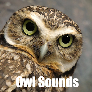 Owl Sounds apk