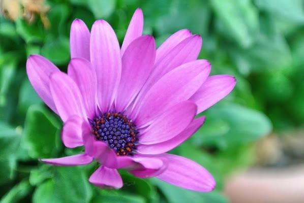 E sciure i fiori di Tiwa