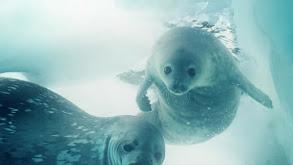 Antarctica's Secrets thumbnail