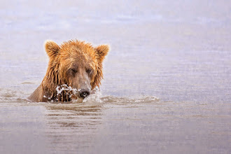 Photo: Fishing bear