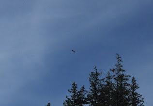 Photo: Eagle hovering above the lake
