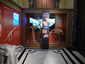 Photo: Visite de l'exposition Gabonionta.