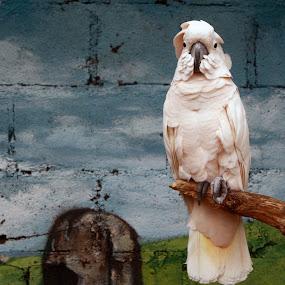 Bird by Yunita Halim - Animals Birds