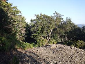 相賀浦トンネル分岐(左が登山道)