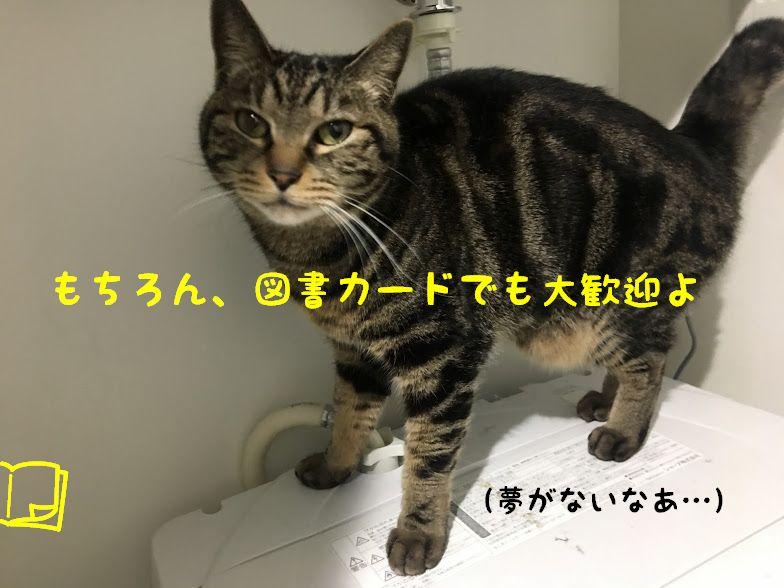 年末企画!おすすめの猫の絵本シリーズ3選!第2弾