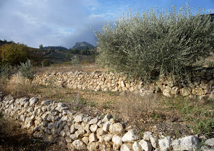 Photo: Restanques et oliviers.