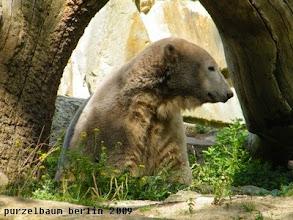 Photo: Hier ist es netter, meint Knut ;-)