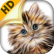 Cat Wallpapers For Home Screen Apk Download Cat Wallpapers For