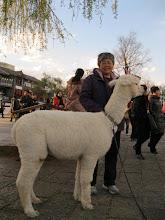 Photo: +王荔蕻大姐 #七一草泥马节