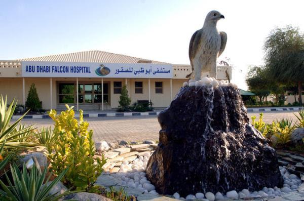 Hospital de Falcões Abu Dhabi