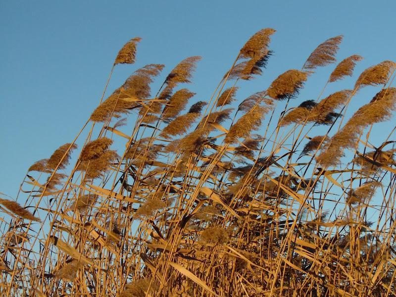Canne al vento di joysphoto