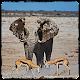 Animal documentaries Download on Windows