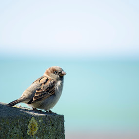 Birdy by Thomas Brunet - Animals Birds ( bird, napier, nikon, d5100, bokeh, new zealand,  )