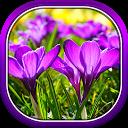Beautiful Spring Flowers Live Wallpaper APK