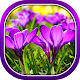 Beautiful Spring Flowers Live Wallpaper apk